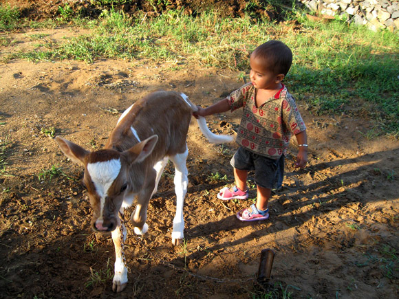 Kid playing with calf